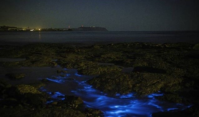 The Mystery of the Blue Glow in Tasmanian Shores Photo 4