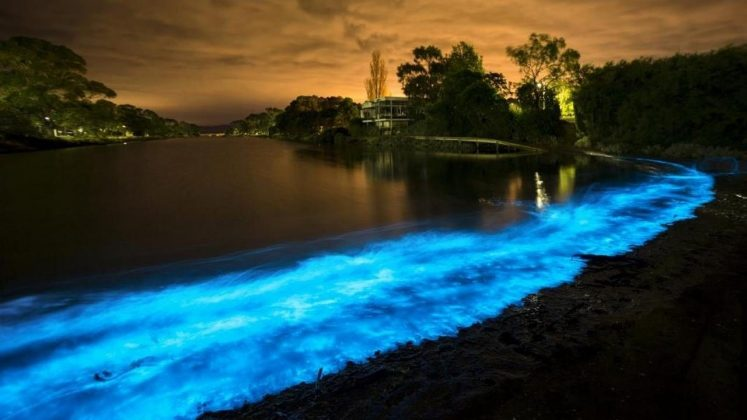 The Mystery of the Blue Glow in Tasmanian Shores Photo 8